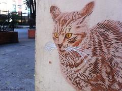 IMG_4825web (Alvaro Barata) Tags: streetart cat stencil estencil