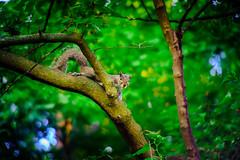 Asanuma test shot (Arutemu) Tags: blur nature vintage lens squirrel dof zoom bokeh  manualfocus     35105 asanuma a7r  sonya7r ilcea7r