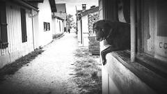 (thierrylothon) Tags: monochrome architecture flickr fuji publication repos noirblanc personnage aquitaine gironde activit lecanon fujix100t fluxapple presquileducapferret presquilecapferret