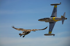 Fly (swong95765) Tags: sky bird clouds plane fly flying flight jet goose
