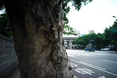 _117 (Taiwan's Riccardo) Tags: ltm color digital taiwan rangefinder fixed  l39 colorskopar 2016 28mmf35 kodakccd leicam9 voigtlanderlens