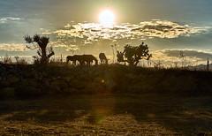 Paesaggi Siciliani 4 - Regalbuto (nunziosantisi) Tags: sunset sun nature landscapes tramonto sony natura sicily paesaggi sicilia agriturismo sonyalpha regalbuto