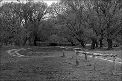 .  7 (Yuriy Sanin) Tags: road trees blackandwhite hitchingpost sanin  yuriy     gclaron2409