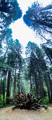 IMG_8635.jpg (edcool1_1) Tags: yosemitevalley california unitedstates us yosemite yosemitenationalpark