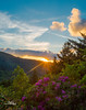 Roan Highlands (Avisek Choudhury) Tags: sunset nc northcarolina rhododendron gitzo tennesee roanmountain carversgap leefilters roanhighlands nikond800 avisekchoudhury acratechballhead nikon1635mm avisekchoudhuryphotography