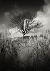 The wait (GP Camera) Tags: sky bw tree monochrome clouds landscape monocromo countryside lightandshadows nuvole afternoon view branches hill dramatic textures campagna silence cielo trunk vista vignetting albero tronco stormysky paesaggio biancoenero lighteffects collina rami silenzio monferrato lucieombre pomeriggio allaperto disquietude trame inquietudine canneto drammatico nikond80 effettidiluce tamronsp1750 cielotempestoso