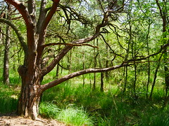 Wurzelweg / Moor/ Graal Mritz (Knipser85) Tags: natur moor wald mritz graal moorgebiet wurzelweg