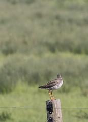 IMG_8266 (Mal.Durbin Photography) Tags: nature birds fauna wildlife insects naturereserve newportwetlands maldurbin goldcliffnewport