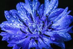 Blue crystal gem (lkiraly72) Tags: blue flower bright crystal drop shining