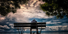 ...SmallCompany... (7H3M4R713N) Tags: sky lake tree bird clouds bench person switzerland pig swiss colorfull fujifilm personne neuchtel xt1 lakeofneuchatel fujinonxf18135mmf3556rlmoiswr