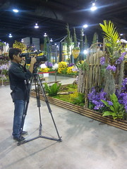 IMG_20160321_111240 (Sasha India) Tags: flowers orchid thailand orchids bangkok exibition apoc   apoc12