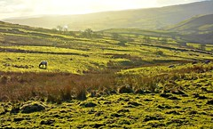 Yorkshire dales (plot19) Tags: sunset england landscape north yorkshie plot19