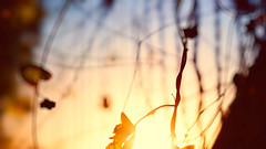 Let it go... (ricdovalle) Tags: life folhas leaves ir 50mm wind random sony go it vida luck alpha let vento deixe acaso a6000 ilce6000