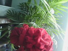 IMG00438 (chicore2011) Tags: flowers bookshelf