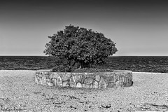 Primera lnea - First line (jmpastorg) Tags: sea blackandwhite bw espaa byn blancoynegro landscape mar spain paisaje alicante 55200 2016 d5100