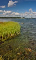 IMG_9013-1 (Andre56154) Tags: sky lake reed water clouds see wasser sweden schweden pflanze himmel wolken ufer schilf schren