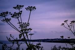 IMG_2985 (Claudia Phillips Photography) Tags: blue sea summer sun seascape beach nature water silhouette seaside weeds calming calm dreamy serene summertime picturesque pendower