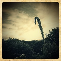 Yucca Flower Sunset (johnnyp_80435) Tags: asparagaceae texas pflugerville mirrorlake dusk sunset yuccaflower yucca