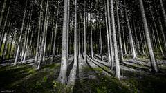Es grnt der Wald (Gruenewiese86) Tags: nature canon germany eos colours natur creative commons cc blau wald harz selective sachsenanhalt 600d