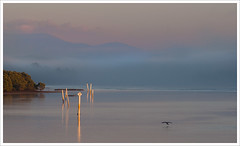 Oyster Lease (caralan393) Tags: morning mist bird sunrise river posts moruya