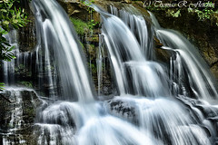 West Virginia Waterfall (travelphotographer2003) Tags: green wet waterfall spring solitude scenic westvirginia serenity keep serene idyllic appalachia refreshment appalachianmountains purity tranquilscene alleghenymountains beautyinnature webstercounty thomasrfletcher