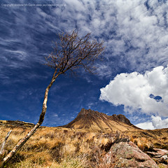 Tree n Stac Pollaidh (amcgdesigns) Tags: blue trees colour tree clouds canon landscape eos scotland highlands northwest unitedkingdom may calming scottish places calm cliffs lightroom stacpollaidh cs4 assynt canon1022mm treshnish eos7d cloudsstormssunsetssunrises lightroom4 andrewmcgavin