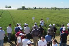 CerealPlus 2.0 - 3866 - Rovigo 13-5-2013 (Image Line) Tags: orzo agricoltura cereali agronotizie syngenta cerealicoltura cerealplus20 syngentaincampo2013