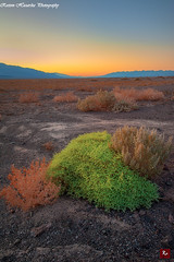 Sunset Near Devil's Golf Course, Death Valley National Park - CA 2012 (www.35mmNegative.com(On a Break, Catchin) Tags: california park sunset photography death nikon san desert postcard dunes devils national valley golfcourse bushes afterglow hazarika www35mmnegativecom reetom