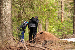 huge anthill in the woods (.:: Maya ::.) Tags: mountain woods couple bulgaria huge hikers anthill    rhodope poliana shiroka