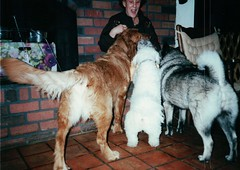 Sammy, Suzie, and Ilsa with my Grandmother (Plaid Ninja) Tags: dog sammy ilsa