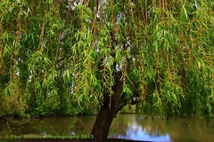 Under the Willow Tree (Free Spirit - Stolen Moments) Tags: lake spring willow willowtree weepingwillowtree