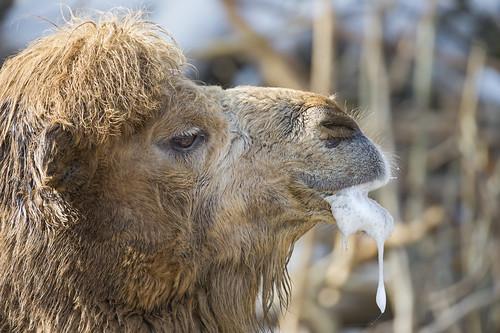 neue hohe Qualität neueste ungeschlagen x camel active ftw