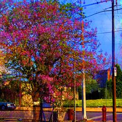 city urban philadelphia collage photoshop photography colorful vivid badlands photmanuplation