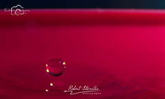 Droplet photography (Robert Stienstra Photography) Tags: water droplets drops droplet waterdrops waterdropphotography dropletphotography nikond5000 robertstienstraphotography