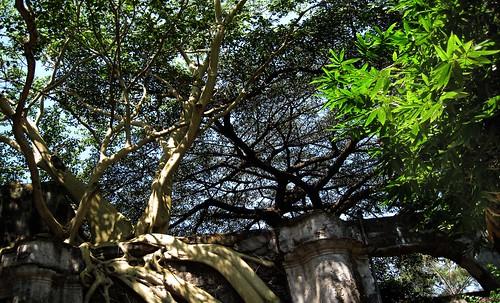 "Ámbitos Verdes • <a style=""font-size:0.8em;"" href=""http://www.flickr.com/photos/30735181@N00/8744027171/"" target=""_blank"">View on Flickr</a>"