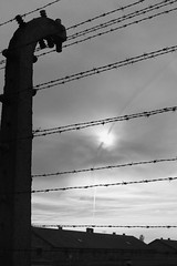 Freedom? (thoughtbottler) Tags: holocaust auschwitz birkenau concentrationcamp shoah auschwitzbirkenau exterminationcamp thoughtbottler