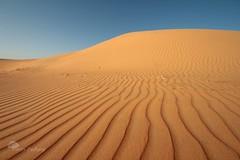 Pas une ride (photosenvrac) Tags: photo ride desert dune sable ciel senegal thierryduchamp