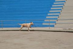 IMH_0528 (Max Hendel) Tags: dog canine cachorro canino dogslife canoneosdigital vidadeco vidadecachorro photobymaxhendel bymaxhendel fotografadopormaxhendel maxhendel photographedbymaxhendel pormaxhendel canoneosphoto photographermaxhendel maxhendelphotography