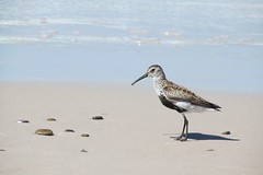 bird on the beach :) (green_lover (I wait for your COMMENTS!)) Tags: sea bird beach nature water animals sand poland łeba