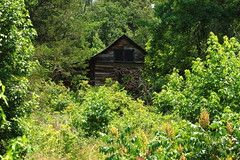 "Old Cabin (""Beaver Jim""Villines Homesite) - Near Ponca, Arkansas (danjdavis) Tags: cabin logcabin arkansas oldbuilding buffalonationalriver historicbuilding"