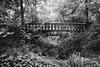 """The Romantic Garden"" (Ges Rules ♥) Tags: old bridge trees blackandwhite plants nature forest vintage garden puente countryside natura romantic lamanoamiga"