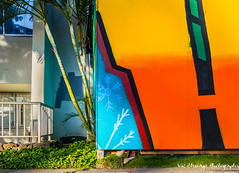 scene with tree and mural (Vic Zhivago) Tags: streetart tree hawaii mural flickr oahu palmtree honolulu juxtaposition