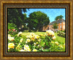 Summer Days Coventry. (nexapt101) Tags: roses coventry fotosketcher
