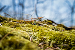 Mini Mountain (jessapaige) Tags: new blue sun lake green nature up leaves sunshine pine outside outdoors 50mm moss nikon close bright bokeh jersey 18 needles twigs d3200