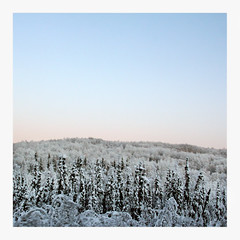 Northern Light (R. Drozda) Tags: winter light sky snow alaska frost hill driveby birch roadside spruce fairbanks borealforest chenahotspringsroad drozda