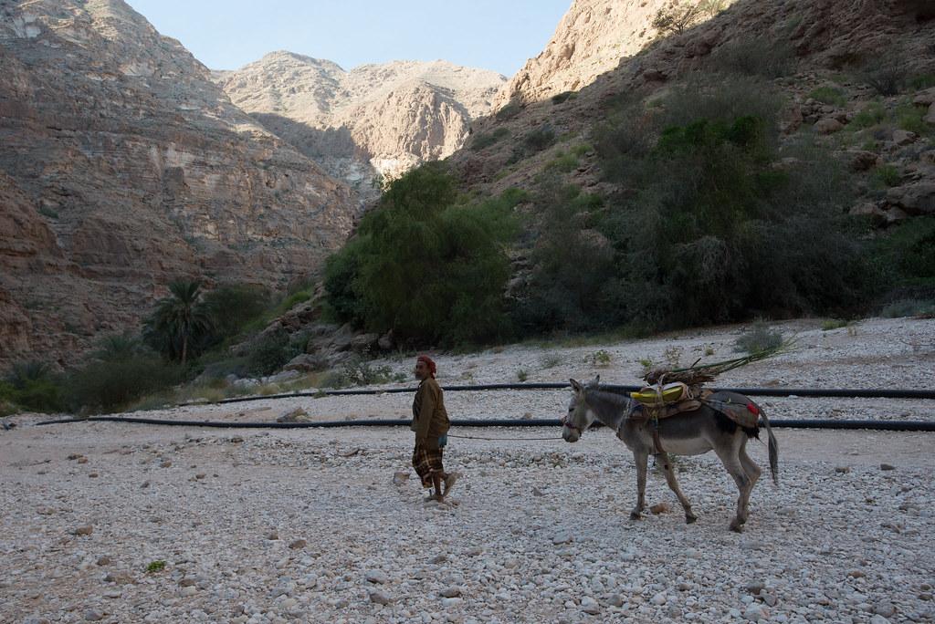 A man and his donkey at Wadi Shab