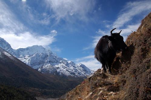 """Everest Base Camp - droga do Dingboche <a style=""""margin-left:10px; font-size:0.8em;"""" href=""""http://www.flickr.com/photos/125852101@N02/16356029327/"""" target=""""_blank"""">@flickr</a>"""