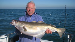 "Mike Hansell with 13lb Pollack • <a style=""font-size:0.8em;"" href=""http://www.flickr.com/photos/113772263@N05/16460321106/"" target=""_blank"">View on Flickr</a>"