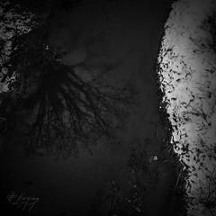 SWMirror (GH#Photography) Tags: schnee silhouette canon eos wasser outdoor pflanzen grau sw spiegelung baum schwarz dunkel trauer weis 600d