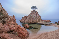 Cala Menuda (alimoche67) Tags: españa minolta sony playa girona 99 catalunya alpha costabrava slt gerona tossademar largaexposicion translucentmirror josejurado